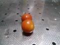 [トマト]7月4日の収穫