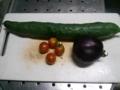 [トマト][胡瓜][茄子][茄子]今日の収穫