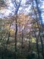 [黄葉]雑木林