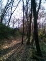 [長池公園]雑木林