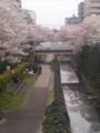 [春][桜]多摩センター