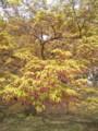 [新緑][春][昭和記念公園]
