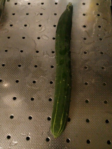 胡瓜の初物