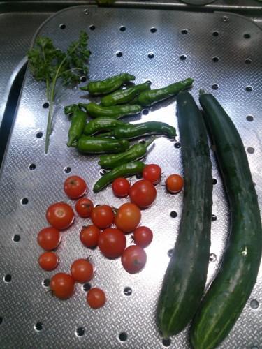 胡瓜、しし唐、トマト、パセリ