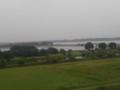 [水辺]雨の渡良瀬遊水地