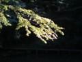 [秋]黄葉