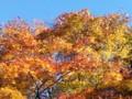 [秋][黄葉]秋