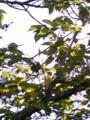 [春][新緑]新緑
