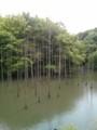 [水辺][新緑][小山内裏公園]大田切池