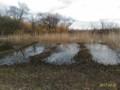 [渡良瀬遊水地]葦焼き後の渡良瀬遊水地