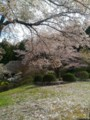 [春][桜][道の駅]道の駅ひがしちちぶ