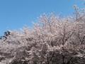 [桜][春][農林公園]