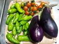[収穫]ナス、しし唐、トマト