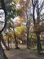 [都幾川][秋]都幾川