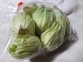 [春][山菜]ふきのとう