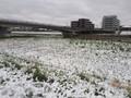 [春][雪]春の雪