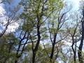 [春]新緑