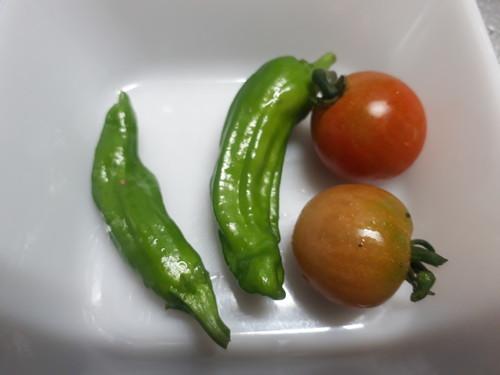 しし唐、トマト