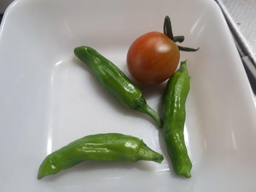 トマト、しし唐