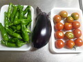 [収穫]茄子・しし唐・トマト