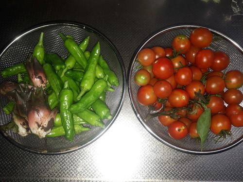 トマト、しし唐、茗荷