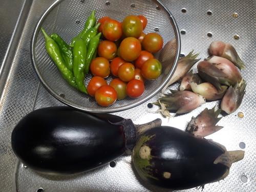 茄子、しし唐、トマト、茗荷