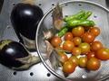 [収穫]しし唐、茗荷、トマト、茄子