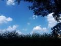 [公園][夏][空]野山北・六道山公園