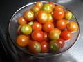 [収穫]トマト