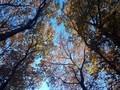 [秋]農林公園