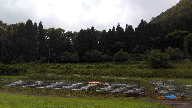 f:id:tottoridekurasu:20160623212335j:image