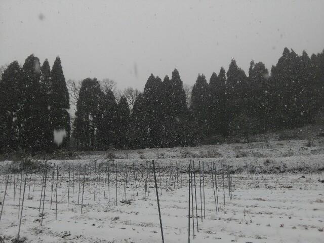 f:id:tottoridekurasu:20170116141312j:image