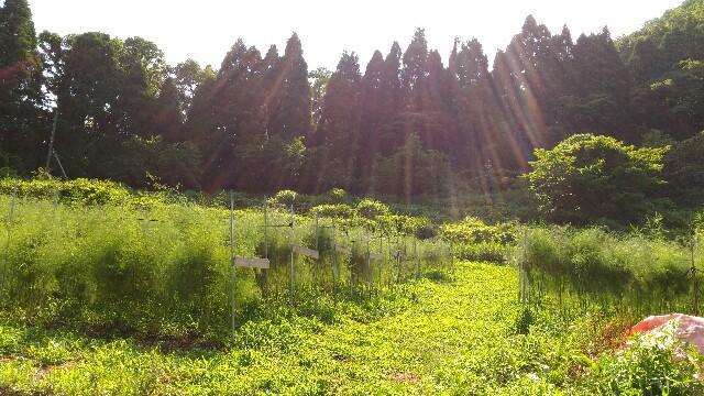 f:id:tottoridekurasu:20170725200612j:image
