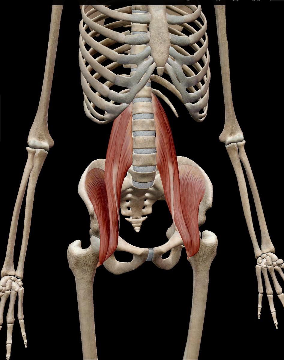 腸腰筋画像