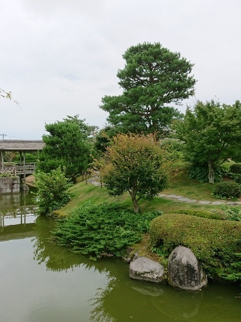f:id:toukaen-bonsai:20190803113157j:plain