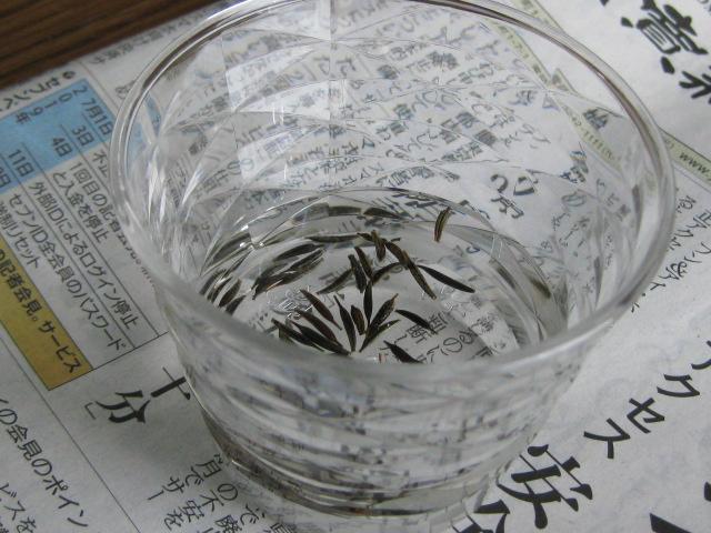 f:id:toukaen-bonsai:20190805215239j:plain