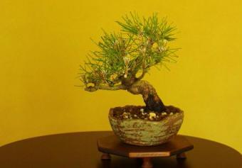 f:id:toukaen-bonsai:20190807164118j:plain
