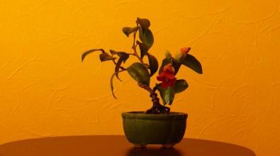 f:id:toukaen-bonsai:20190829164054j:plain