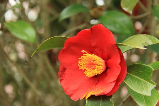 f:id:toukaen-bonsai:20190830144308j:plain