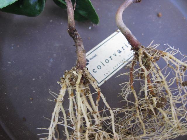 f:id:toukaen-bonsai:20190830150546j:plain