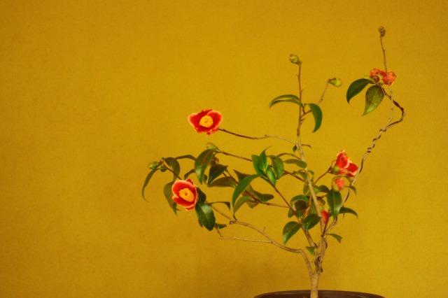 f:id:toukaen-bonsai:20190830151612j:plain