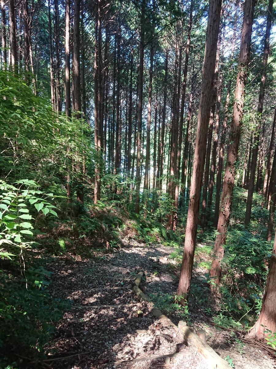 f:id:toukaen-bonsai:20190904144233j:plain