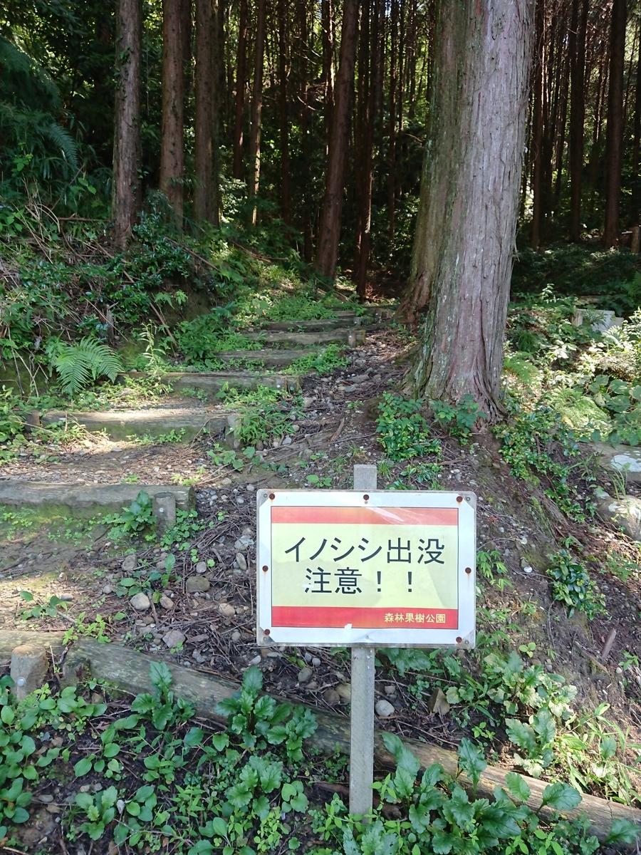 f:id:toukaen-bonsai:20190904144510j:plain