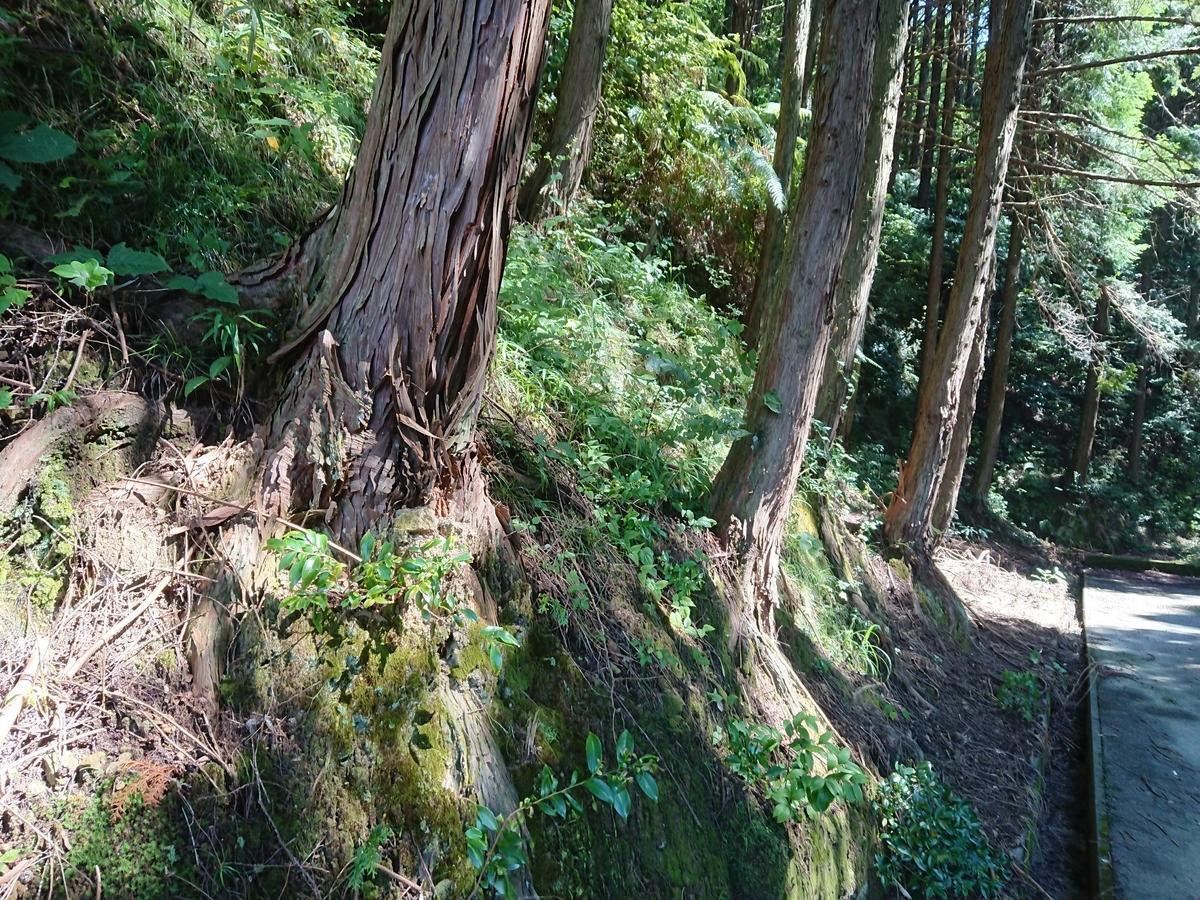 f:id:toukaen-bonsai:20190904145202j:plain