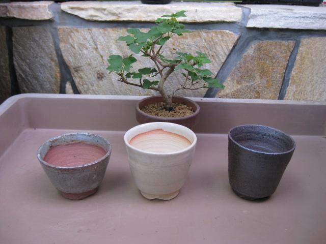 f:id:toukaen-bonsai:20190904152840j:plain