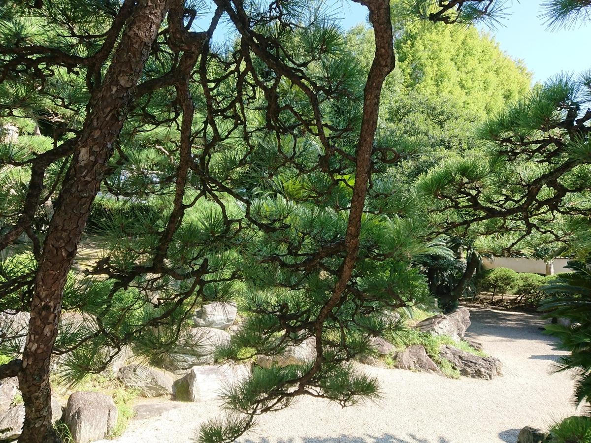 f:id:toukaen-bonsai:20191008163318j:plain