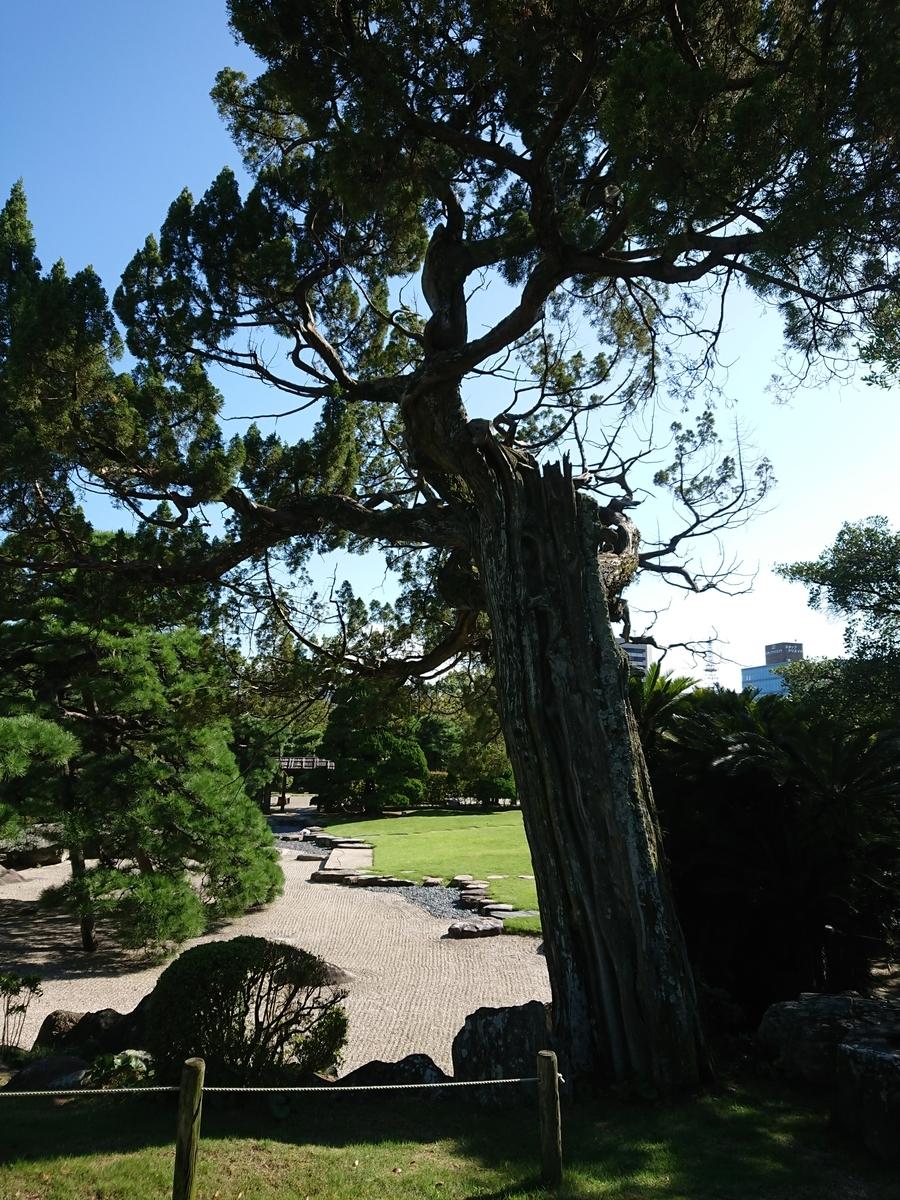 f:id:toukaen-bonsai:20191008163705j:plain