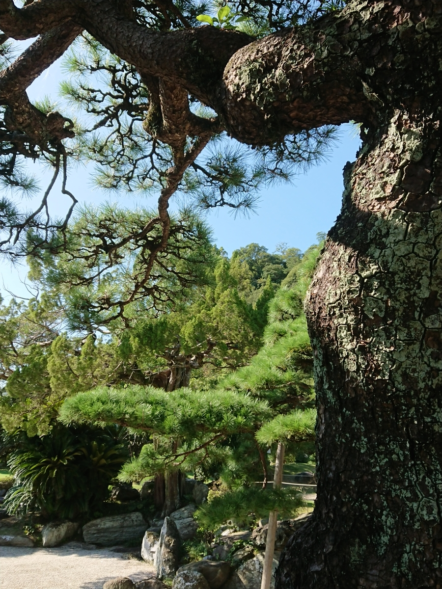 f:id:toukaen-bonsai:20191008163816j:plain