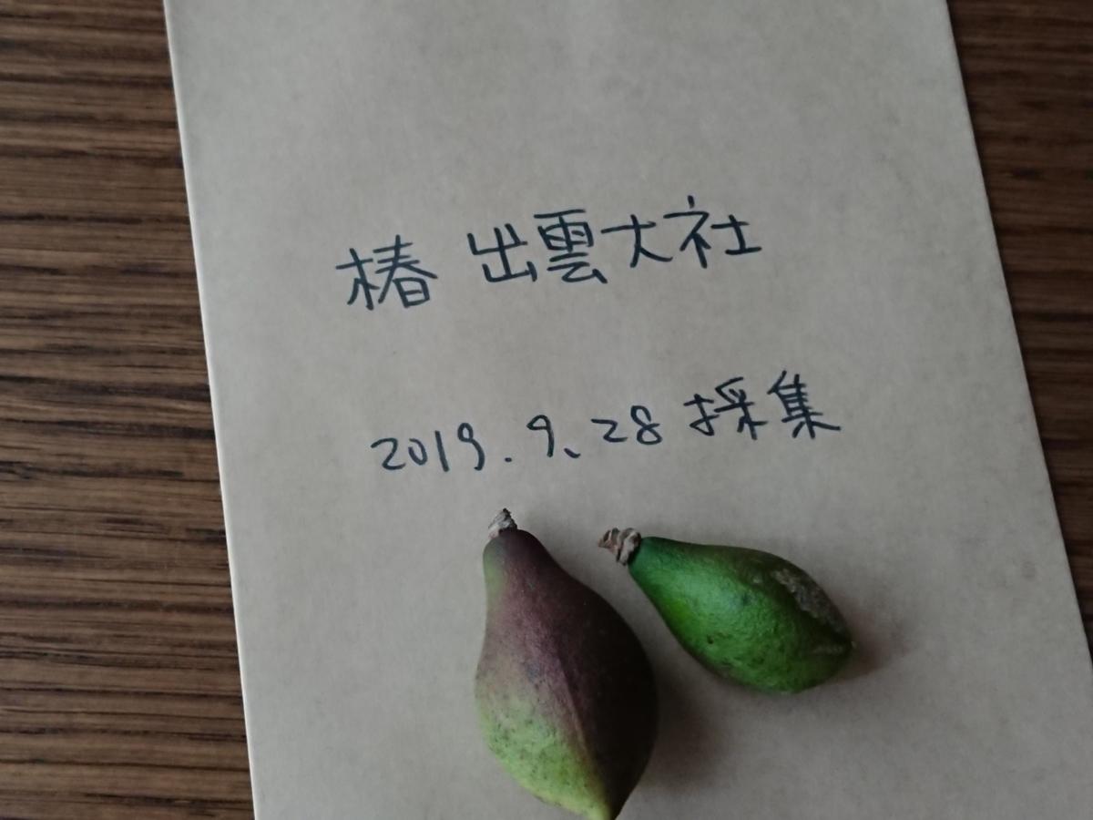 f:id:toukaen-bonsai:20191009141200j:plain