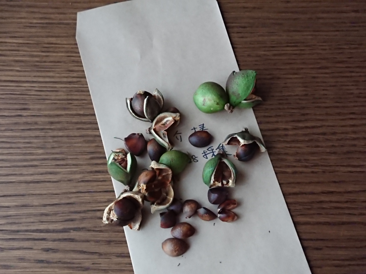 f:id:toukaen-bonsai:20191009141451j:plain